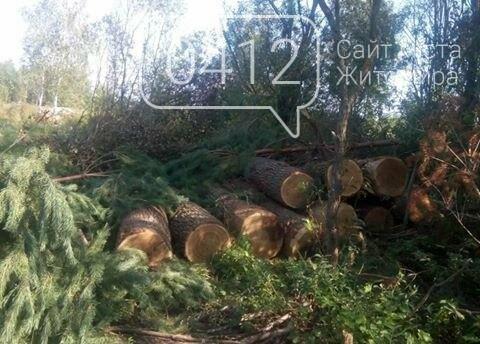 У Житомирському районі поліцейські виявили склад краденої деревини, фото-4