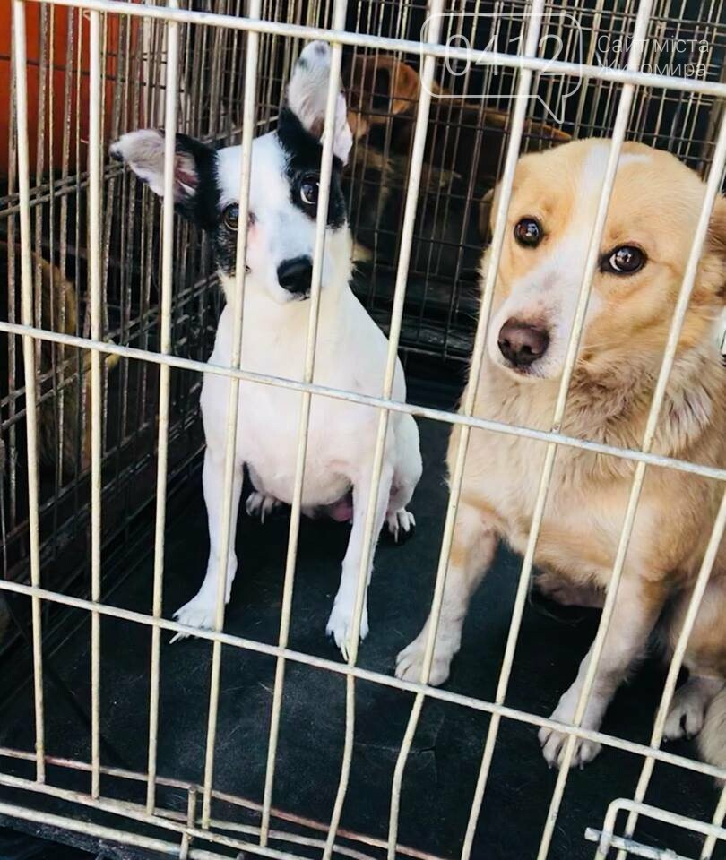 У Житомирі продовжують стерилізацію безпритульних тварин, фото-2