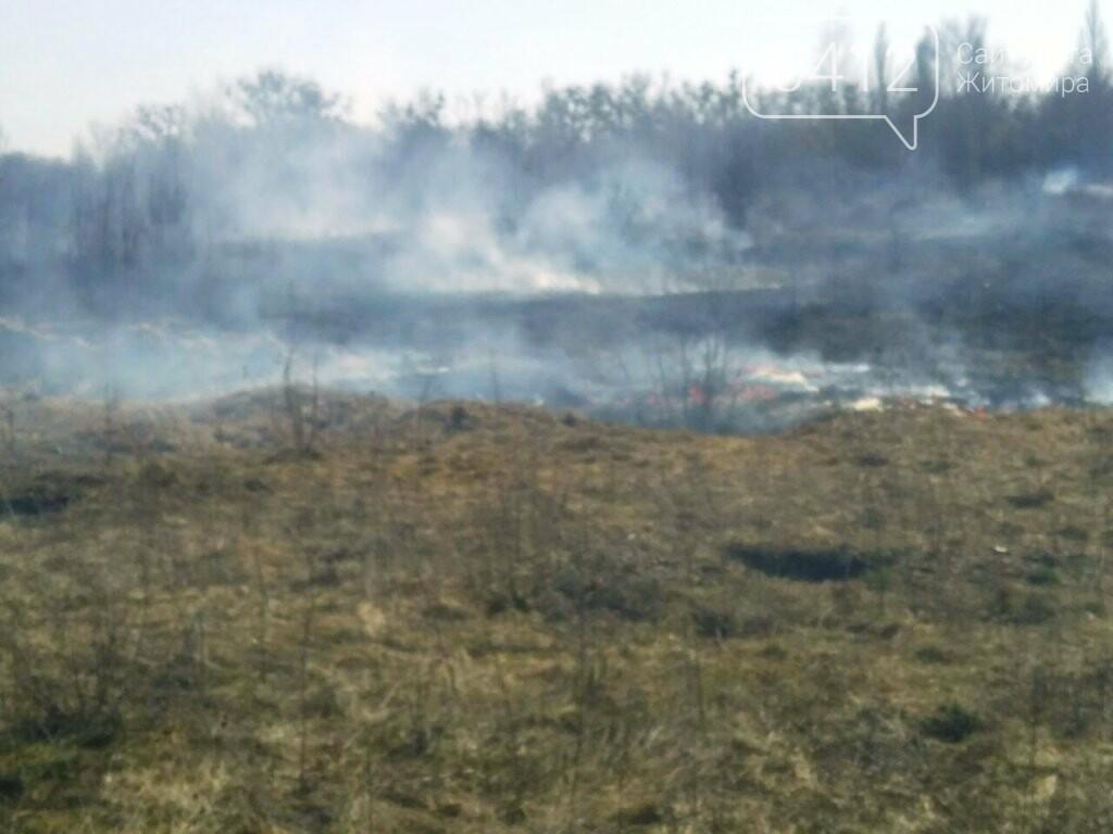 На Житомирщині почали горіти поля та чагарники, фото-1