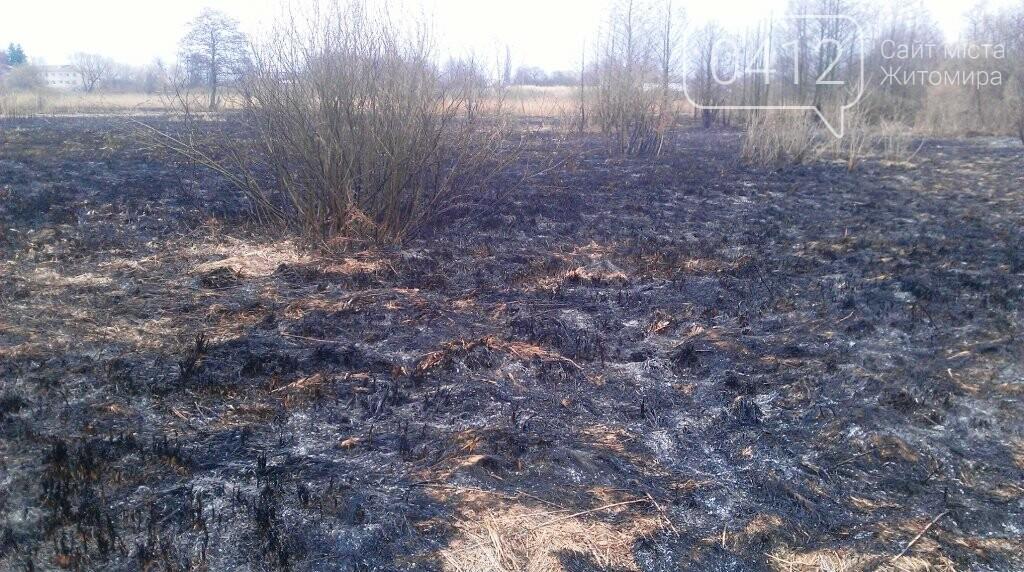 На Житомирщині почали горіти поля та чагарники, фото-4