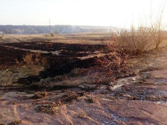На Житомирщині за добу вигоріло 1,5 гектари сухої трави, фото-1