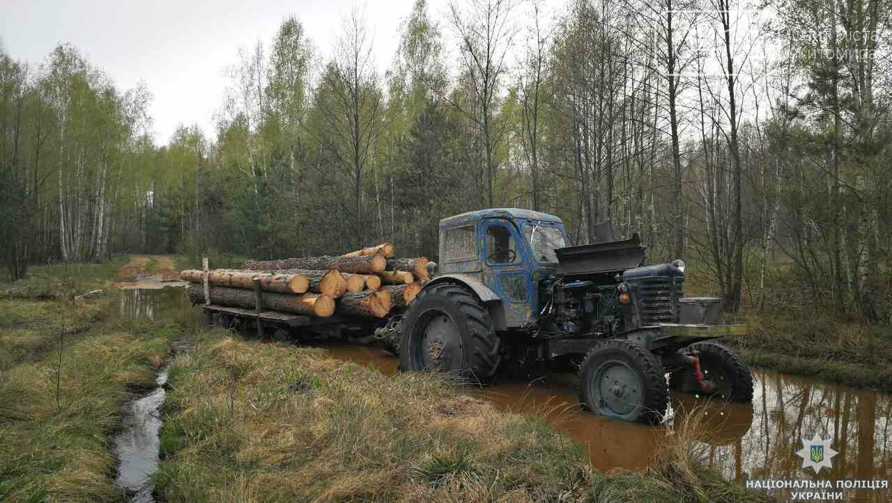 На Житомирщині поліція розслідує крадіжки деревини, фото-2