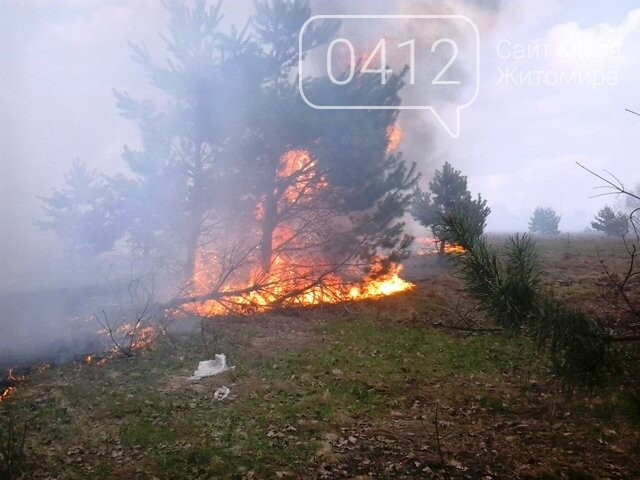 За добу на Житомирщині вигоріло майже 9 гектарів сухої трави, фото-1