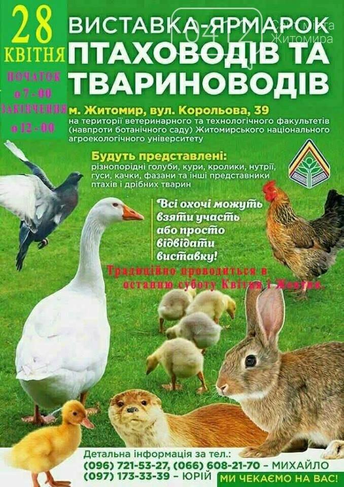 У Житомирі знову проведуть виставку-ярмарок птаховодів і твариноводів, фото-1