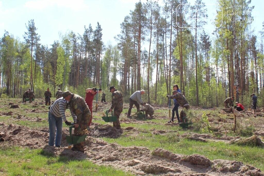 На Житомирщині журналісти висадили ще одну, вже 9-у, ділянку лісу, фото-3
