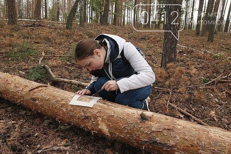 Житомирська школярка стала першим науковцем, яка вивчила ворогів короїда, фото-1
