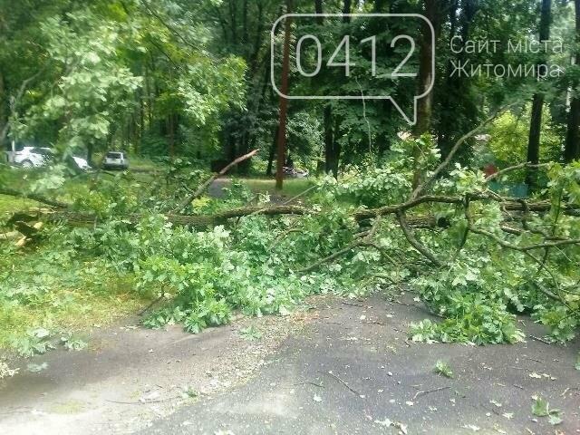 Буревій на Житомирщині поламав дерева, фото-2
