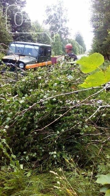 Буревій на Житомирщині поламав дерева, фото-1