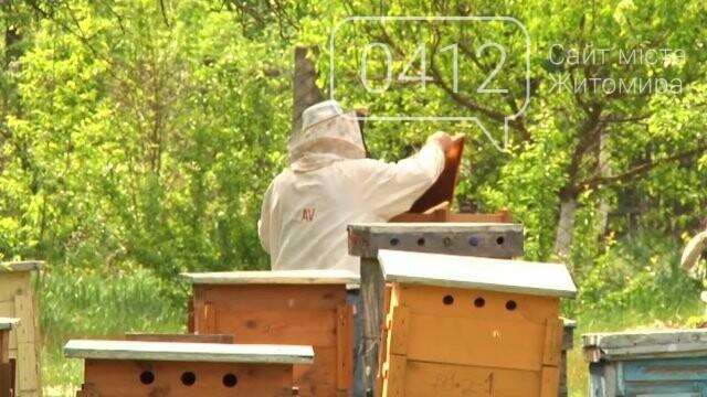 На Житомирщині зростуть ціни на мед, фото-2