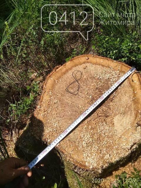 Житомирські лісівники активно борються з лісопорушниками, фото-1