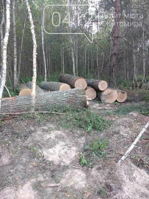 Житомирські лісівники активно борються з лісопорушниками, фото-2