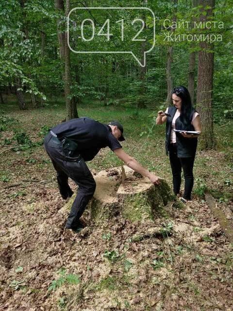 Житомирські лісівники активно борються з лісопорушниками, фото-3