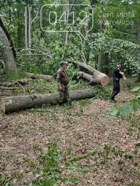 Житомирські лісівники активно борються з лісопорушниками, фото-4