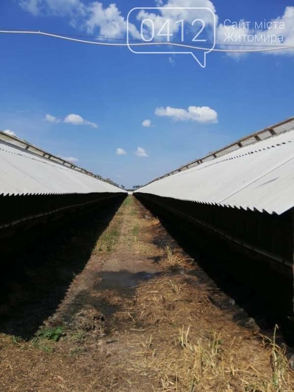 Суд припинив діяльність норкової ферми на Житомирщині, де знущалися над тваринами, фото-3