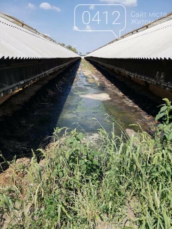 Суд припинив діяльність норкової ферми на Житомирщині, де знущалися над тваринами, фото-1