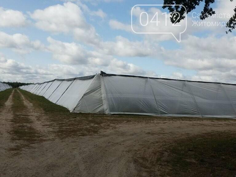 У Житомирській області фермер висадив 450 га лохини. ФОТО, фото-13