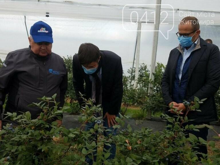У Житомирській області фермер висадив 450 га лохини. ФОТО, фото-15