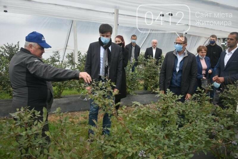 У Житомирській області фермер висадив 450 га лохини. ФОТО, фото-2