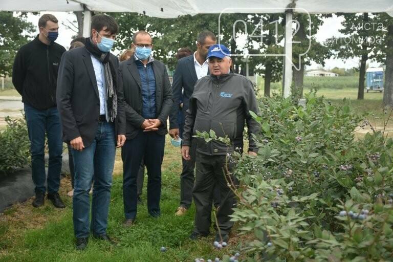 У Житомирській області фермер висадив 450 га лохини. ФОТО, фото-5