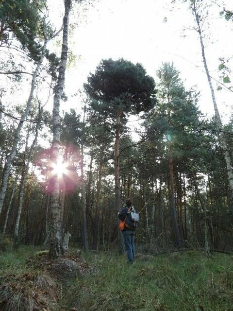 Фотозамальовка: у Пищівському лісництві, фото-1