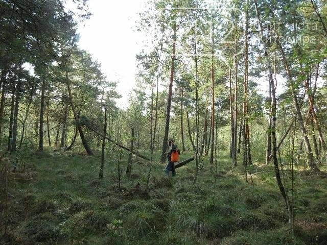 Фотозамальовка: у Пищівському лісництві, фото-5