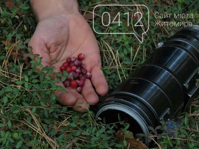 Фотозамальовка: у Пищівському лісництві, фото-6
