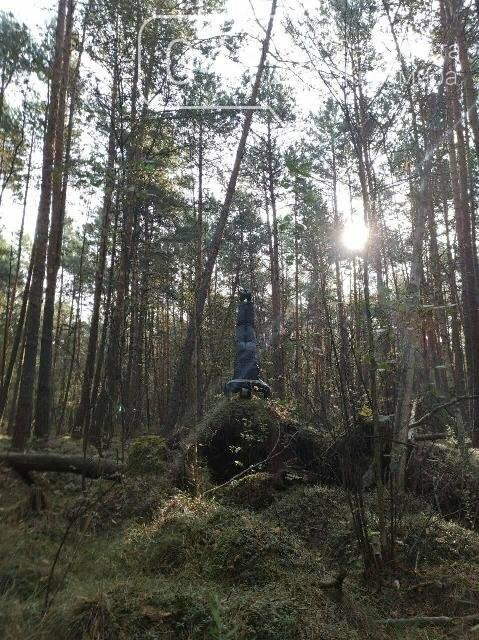 Фотозамальовка: у Пищівському лісництві, фото-7