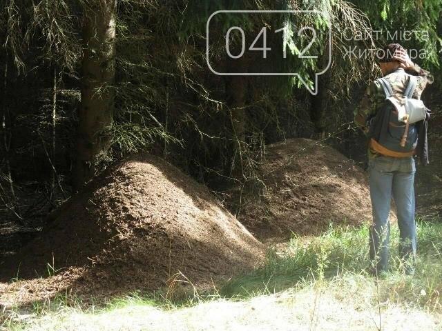 Фотозамальовка: у Пищівському лісництві, фото-8