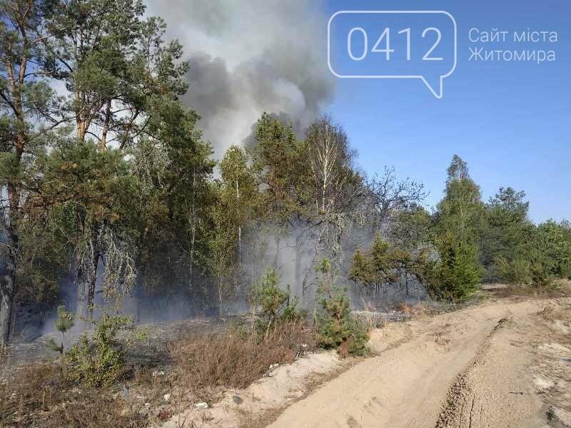 На Житомирщині вогнеборці загасили одинадцять загорянь сухостою, фото-3