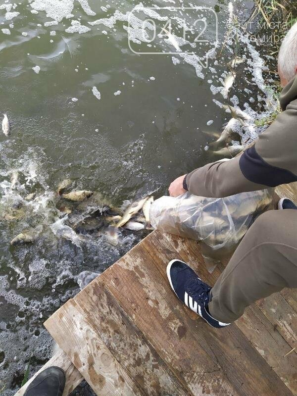 На Житомирщині у водойму поблизу села вселили 2,4 тис молодої риби. ФОТО, фото-7