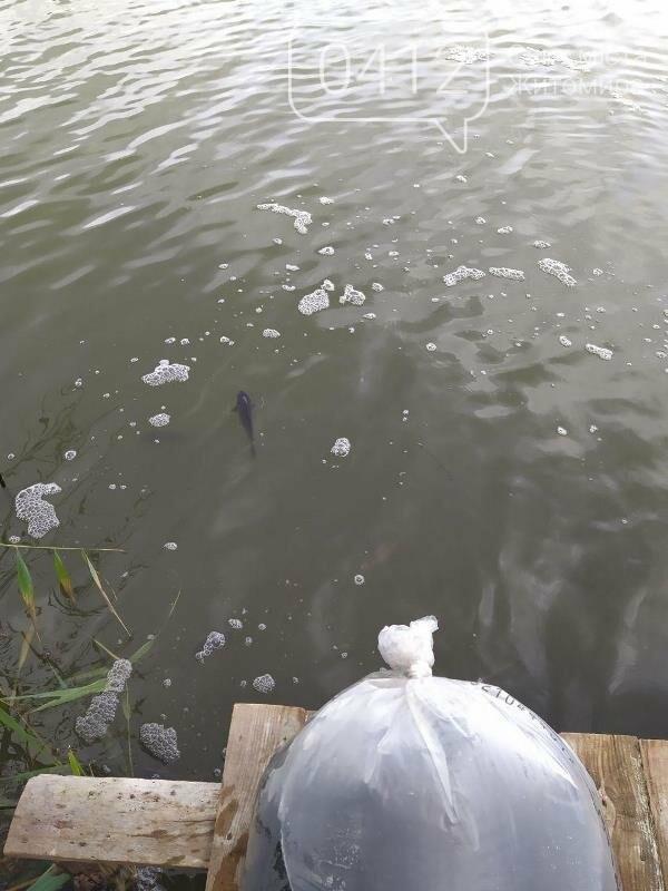 На Житомирщині у водойму поблизу села вселили 2,4 тис молодої риби. ФОТО, фото-9