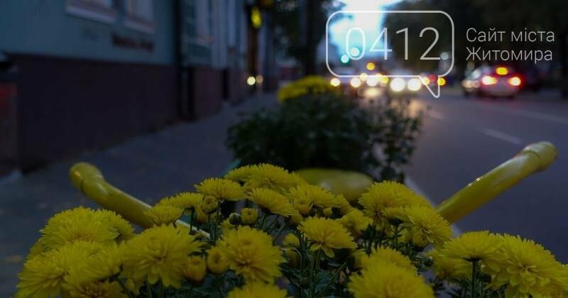 Краса вечірнього Житомира у світлинах, фото-5