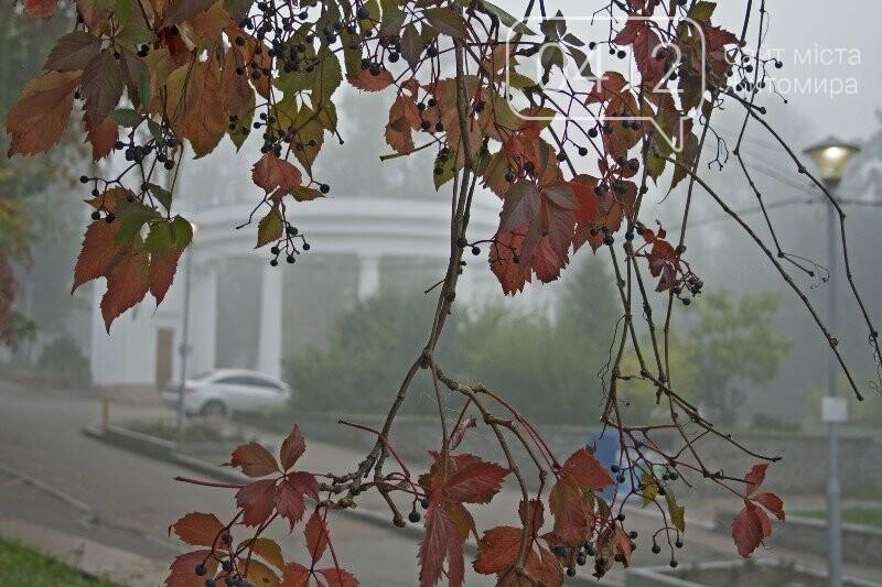 Осінь, парк, туман: фотопрогулянка жовтневим Житомиром, фото-4