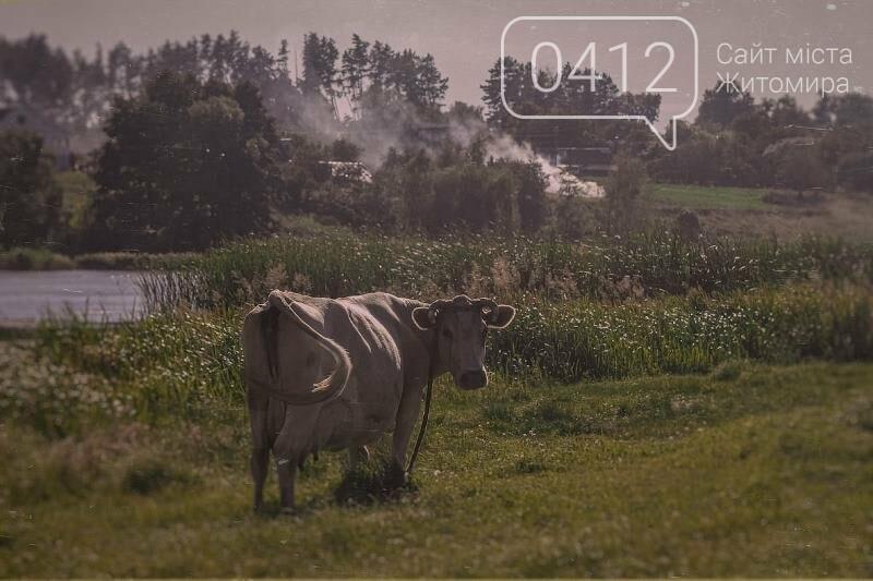 Водні мешканці, сільський колорит Житомирщини. ФОТО, фото-12