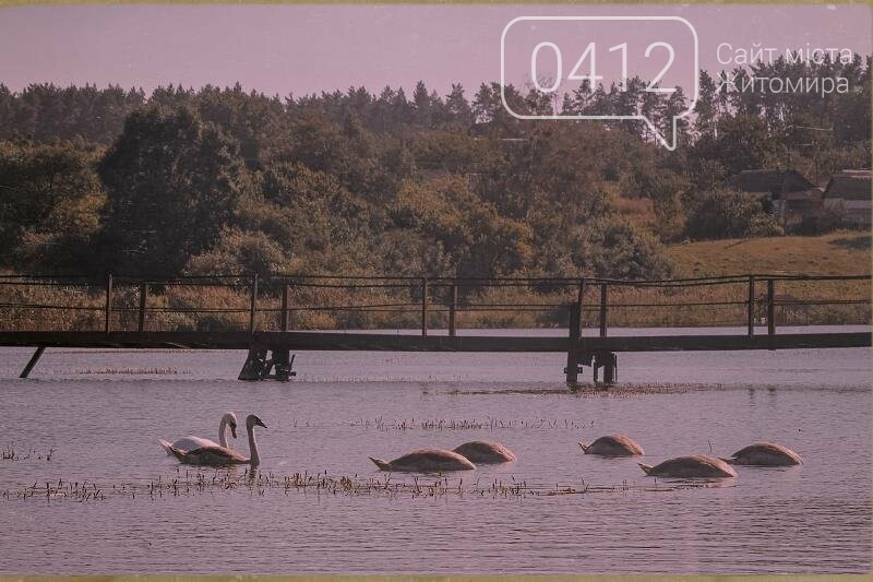 Водні мешканці, сільський колорит Житомирщини. ФОТО, фото-1