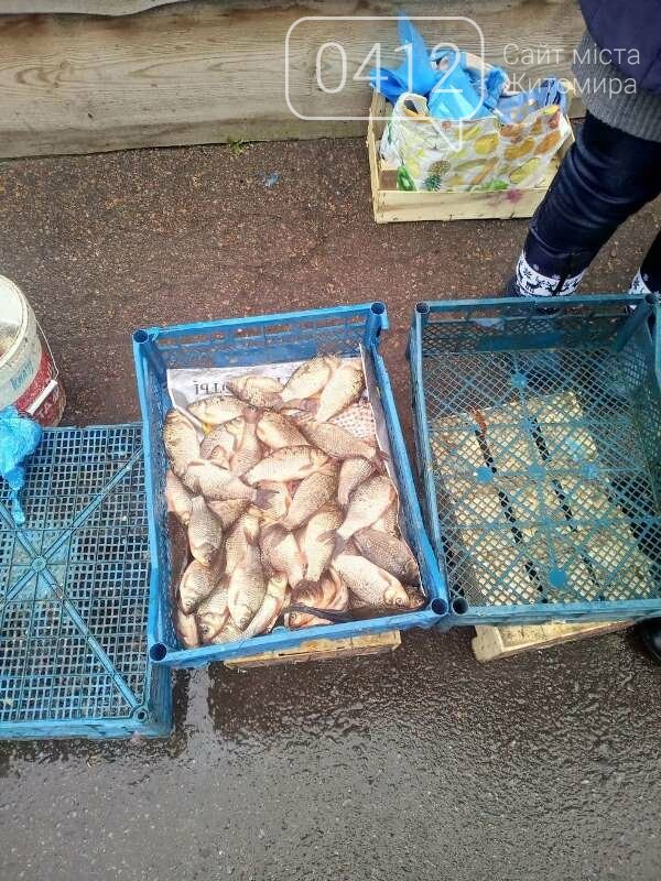 За три дні на Житомирщині виявлено 20 порушень правил рибальства, фото-3