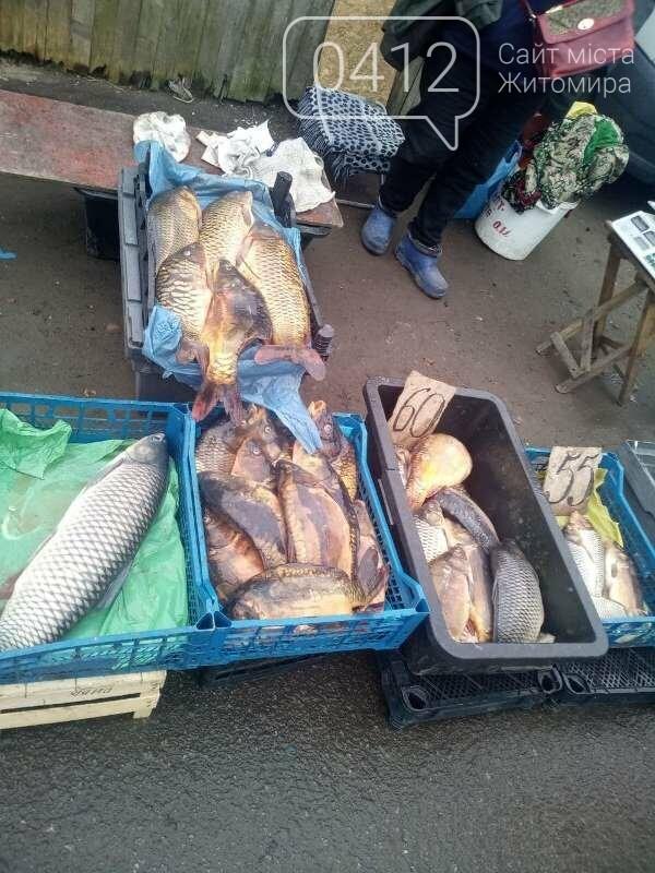 За три дні на Житомирщині виявлено 20 порушень правил рибальства, фото-5