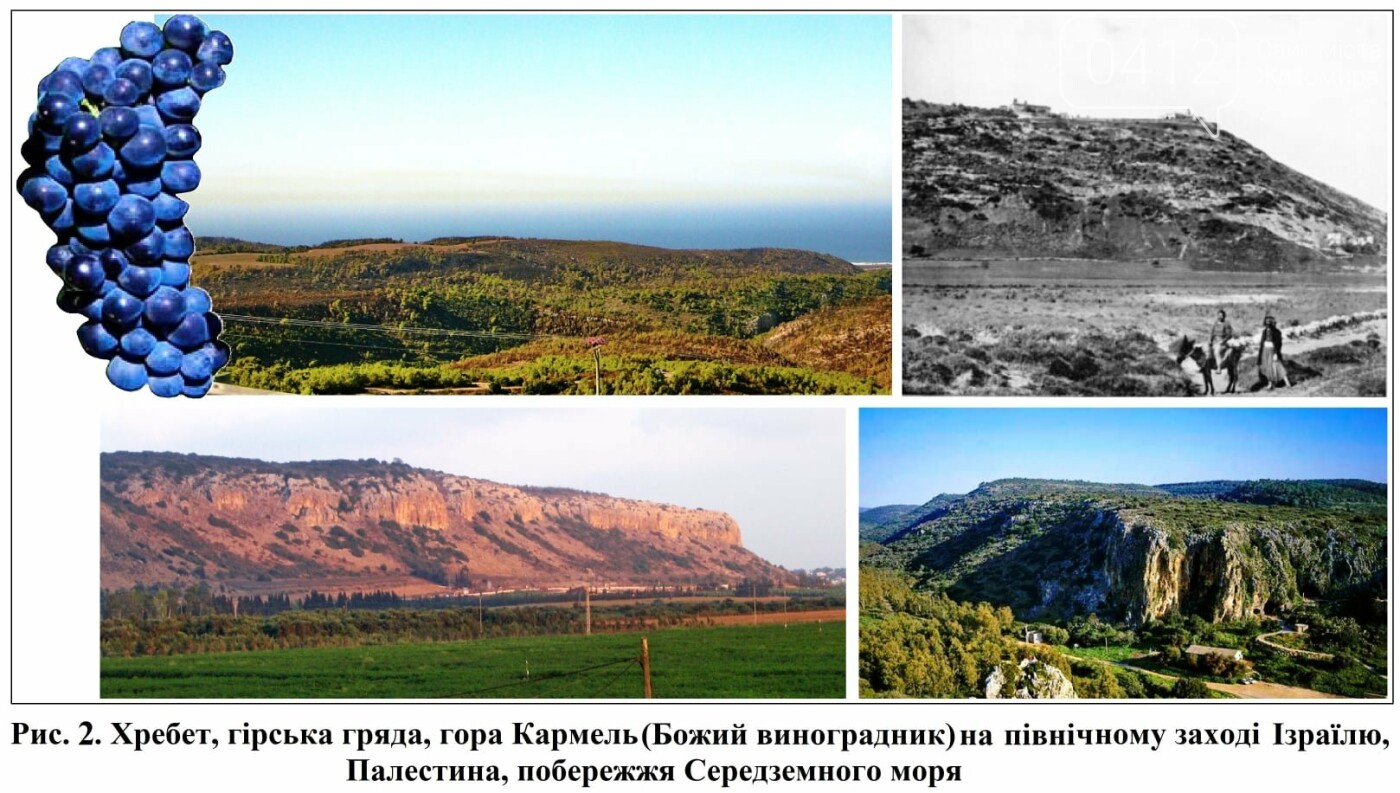 Хмільний напій з Палестини, або розвиток торгівлі у Житомирі в минулому столітті, фото-2