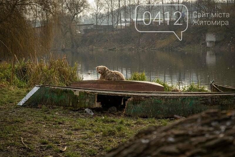 Чаруючі пейзажі січневого Житомира. ФОТО, фото-5