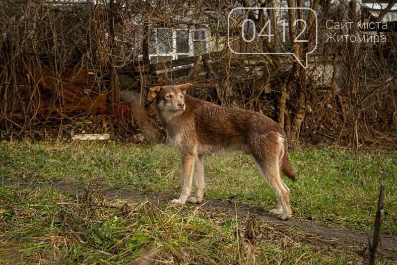 Чаруючі пейзажі січневого Житомира. ФОТО, фото-6