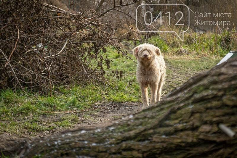 Чаруючі пейзажі січневого Житомира. ФОТО, фото-7