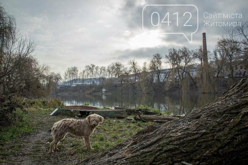 Чаруючі пейзажі січневого Житомира. ФОТО, фото-8