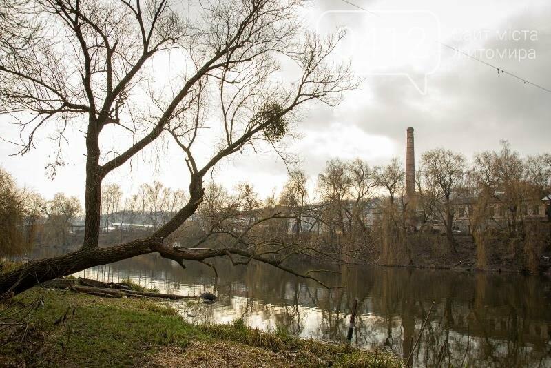 Чаруючі пейзажі січневого Житомира. ФОТО, фото-9