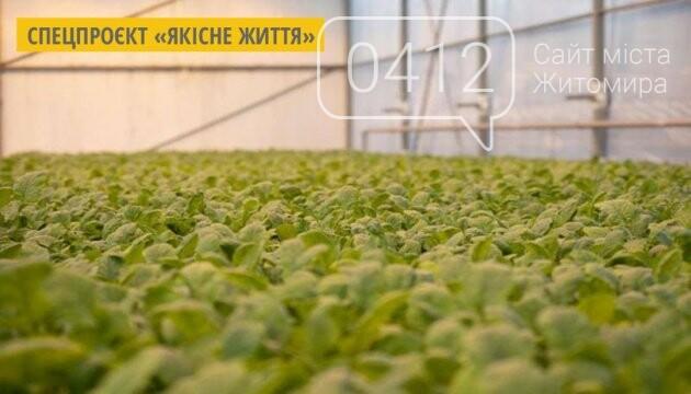 У теплиці одного з житомирських університетів вирощують органічні салати і пряні трави. ФОТО, фото-4