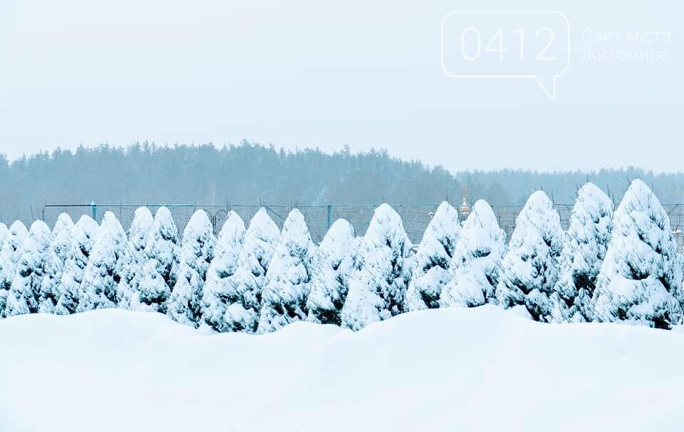 Справжня зима в жіночому монастирі на Житомирщині: у мережі опублікували дивовижні світлини. ФОТО, фото-7