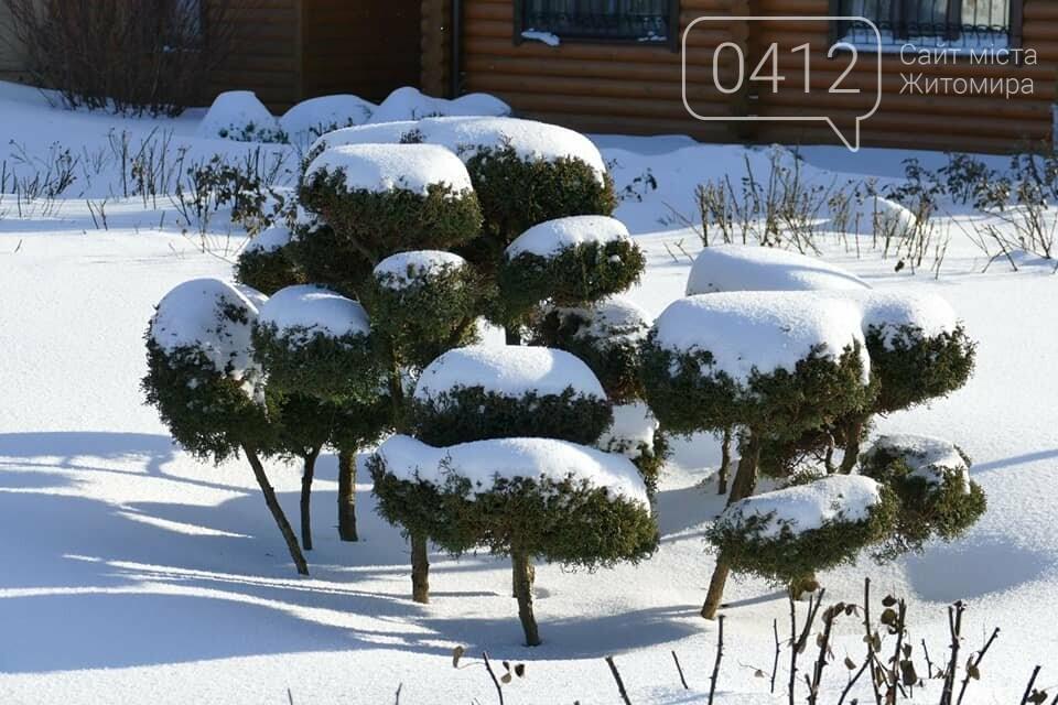 Справжня зима в жіночому монастирі на Житомирщині: у мережі опублікували дивовижні світлини. ФОТО, фото-8