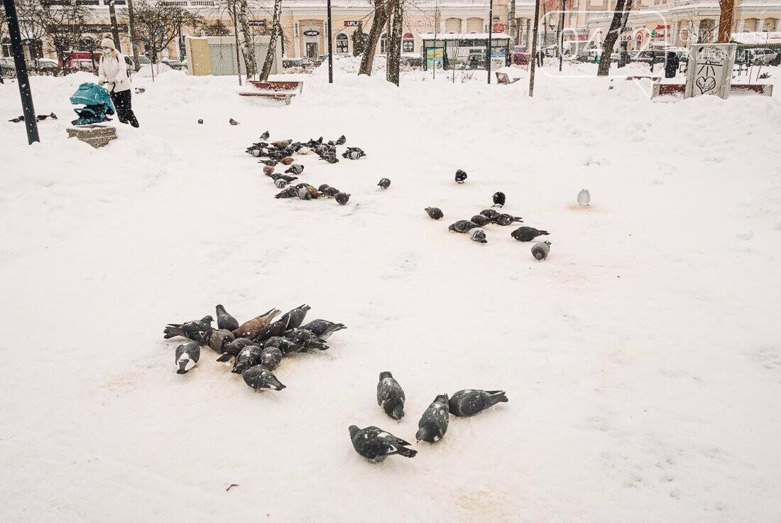 У ритмі зимового міста: колорит засніжених вулиць Житомира. ФОТО, фото-28