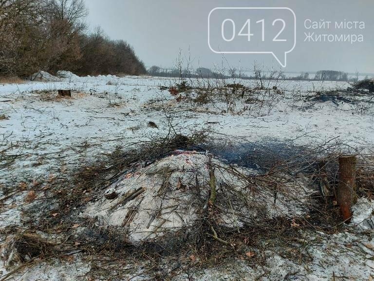 Чи законно вирізають садок у Карабчиєві на Житомирщині?, фото-3