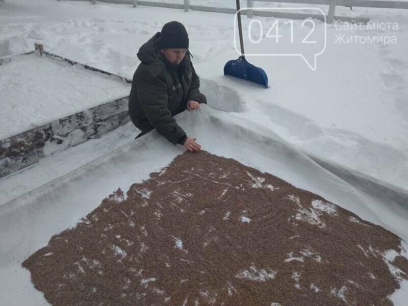 Городницькі лісівники снігують насіння хвойних, фото-1