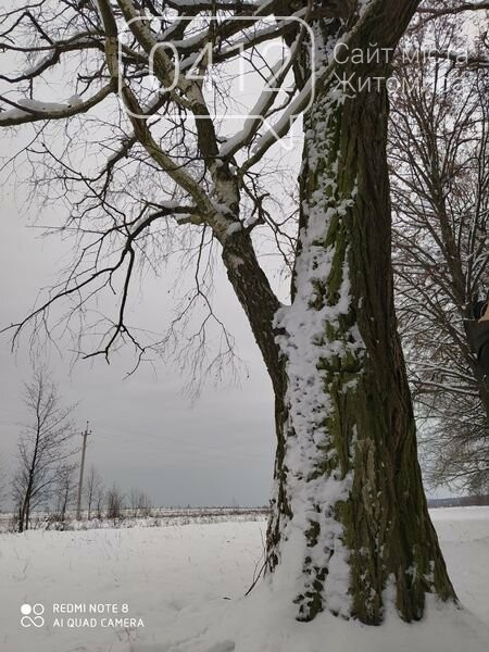 «Незвичайні дерева навколо нас»: на Житомирщині лісівники оголошують челендж, фото-1